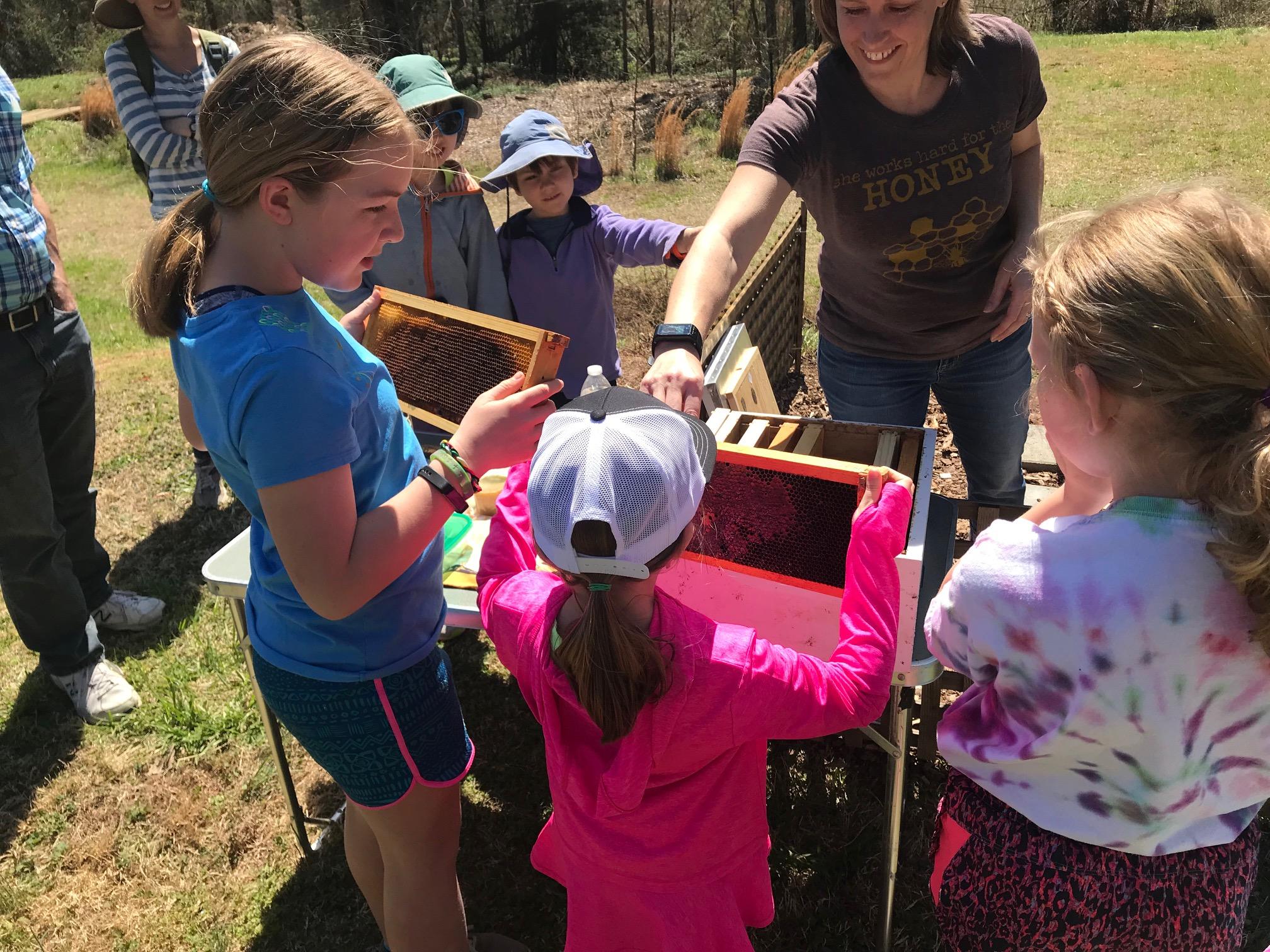 Bee hive demonstration