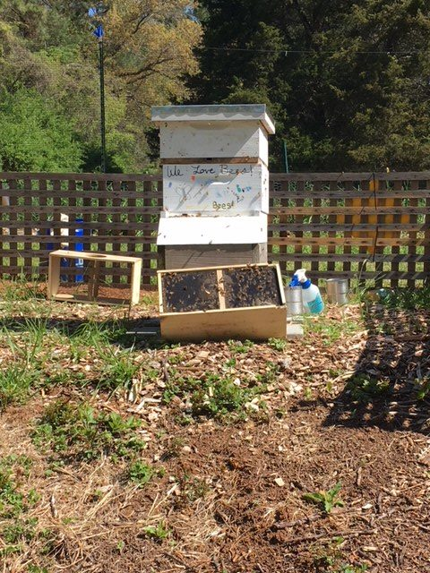 A successful bee installation